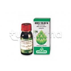 Specchiasol Gemmosol Ribes Nero Macerato Glicerico 100 ml