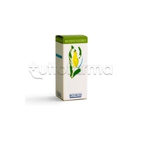 Viburnum L Gemme Medicinale Omeopatico Macerato Glicolico60 ml