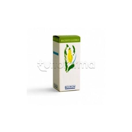 Olea Europaea Macerato Glicolico 60 ml