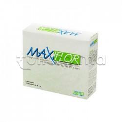 Maxiflor 20 Buste