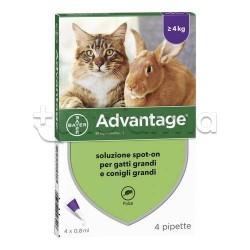 Advantage Spot On Antiparassitario Veterinario per Gatti e Conigli 4 Pipette