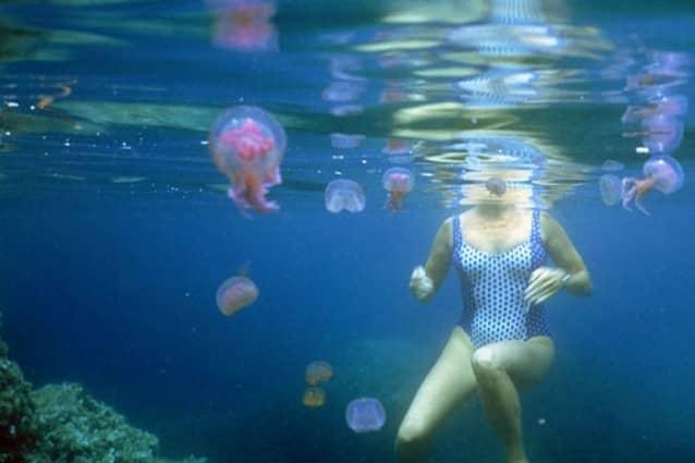 rimedi-naturali-per-le-punture-di-medusa