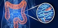 Asse intestino- fegato: come agisce sulla regolazione del metabolismo?